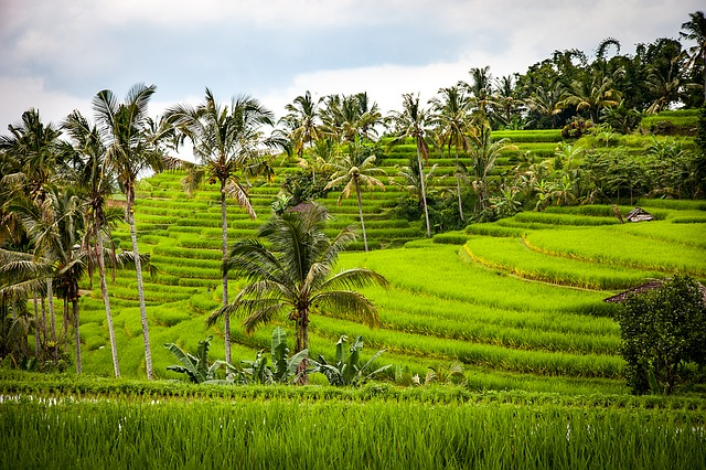 Five activities you must do in Bali
