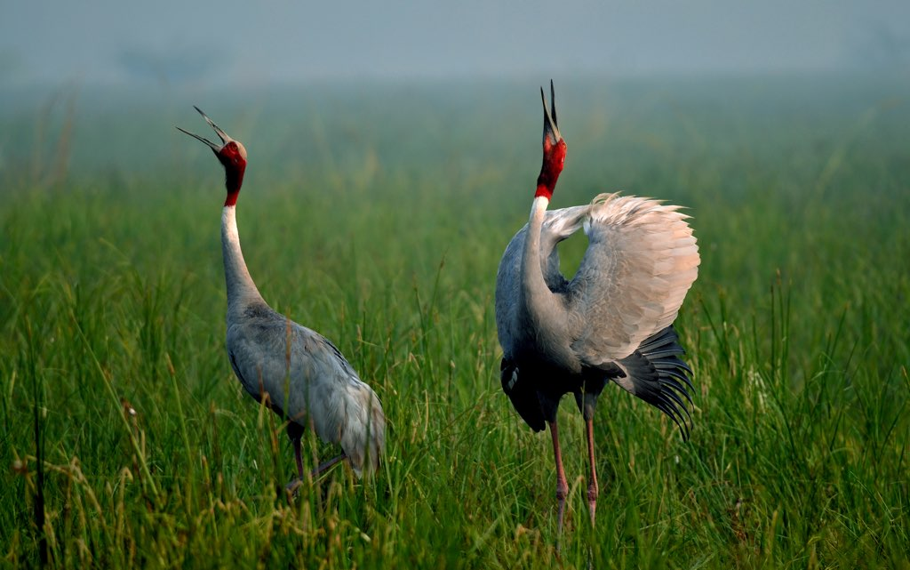 Top Things To Do In Bharatpur of Rajasthan